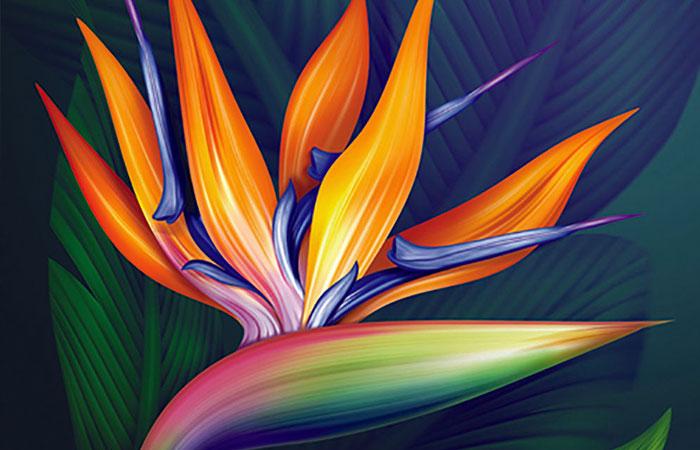 Hoa thiên điểu là loại hoa rất được ưa chuộng tại châu Á